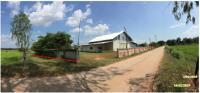 ที่ดินพร้อมสิ่งปลูกสร้างหลุดจำนอง ธ.ธนาคารกรุงไทย มหาสารคาม กิ่งกุดรัง เลิงแฝก